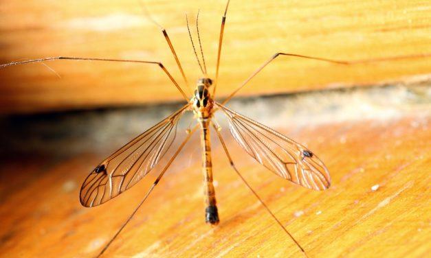 Malaria: Que no te amargue el viaje un mosquito
