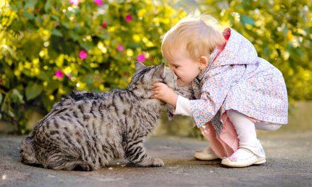 Aumentan las alergias a animales. Importante reconocer los síntomas y tomar ciertas precauciones ⚠