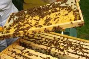 shutterstock 38682112 300x200 - Por qué las abejas son imprescindibles