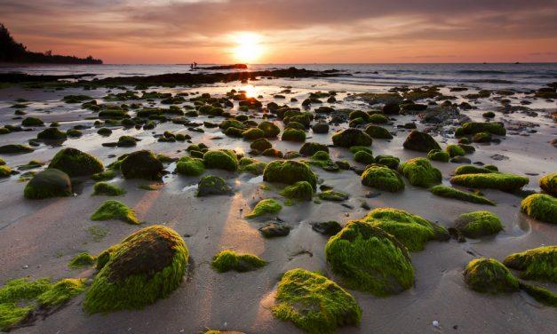 Algas, tesoros saludables del mar
