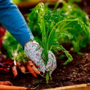 shutterstock 139860841 300x300 - Cultiva tus propias verduras