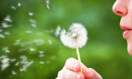 Consejos para «sobrevivir» al polen