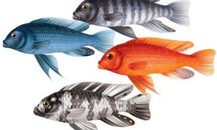Surgen nuevos fármacos a partir del pez cebra para tratar Psoriasis y Anemia