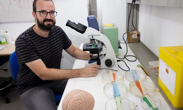 Estudian el desarrollo de cerebros gemelos digitales para la mejora terapéutica de enfermedades neorológicas