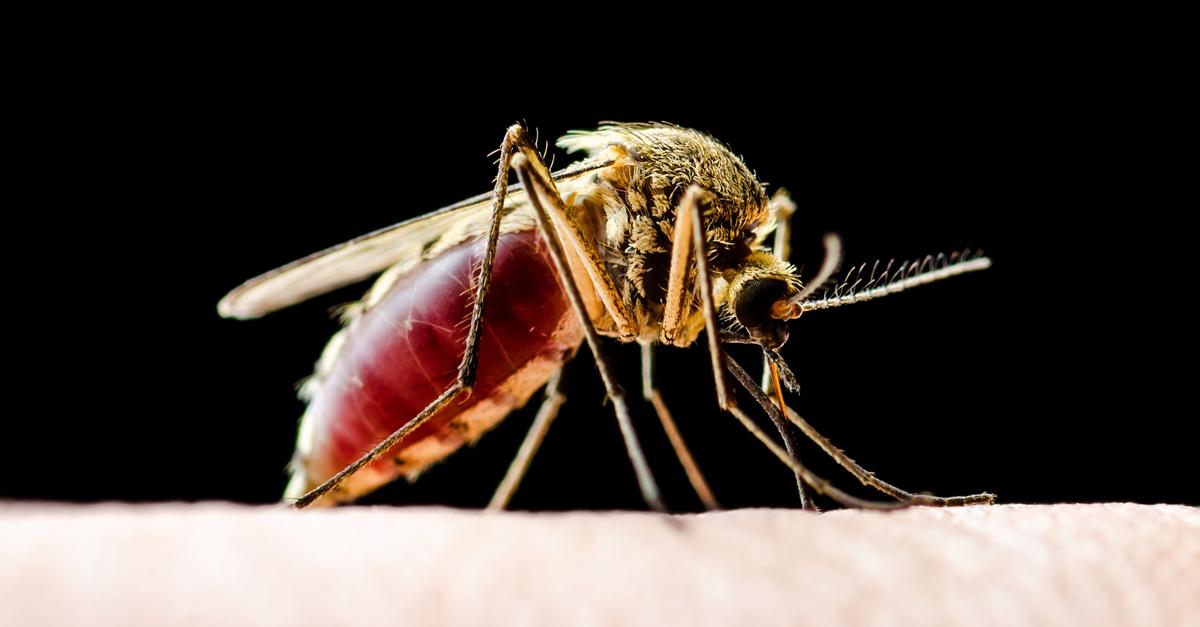 Se prevé que la malaria y el dengue afecten a miles de millones de personas más a finales de siglo
